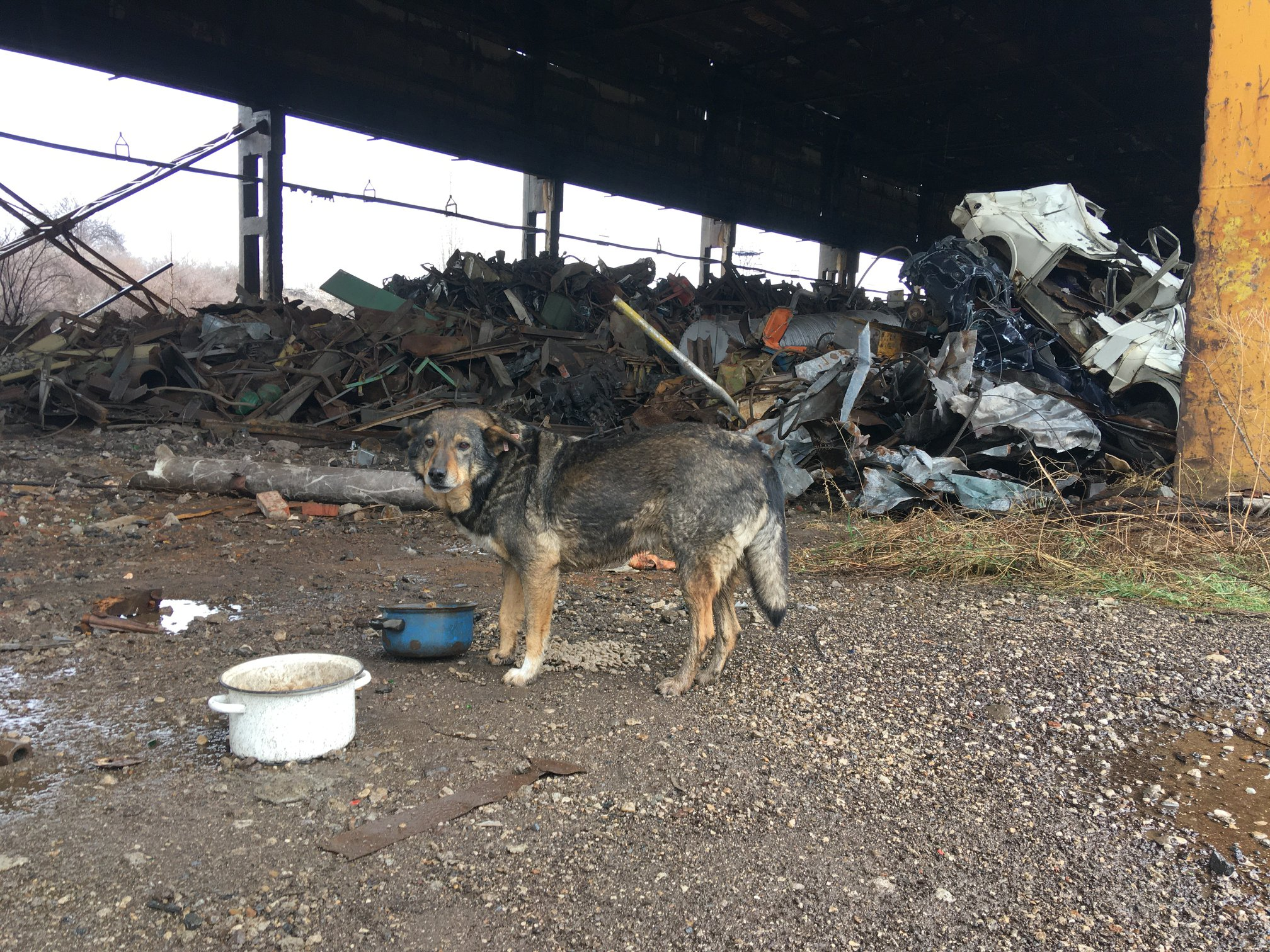 the desolate Kremikovtsi site where dogs live without any humans