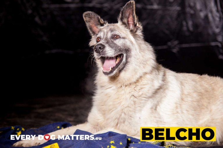 belcho5