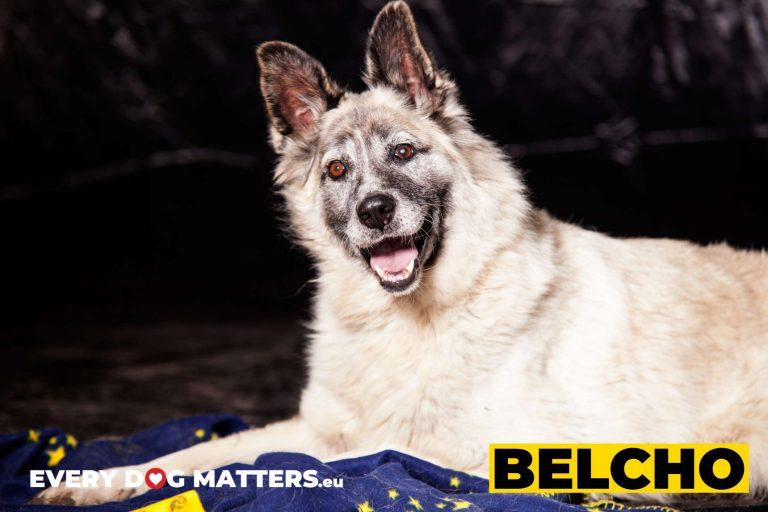 belcho6