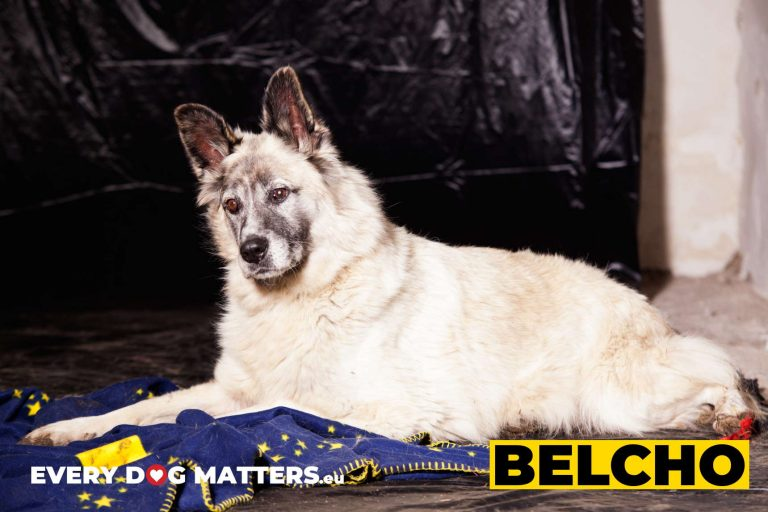 belcho7