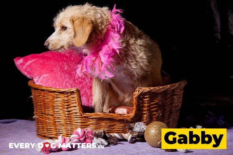 gabby3