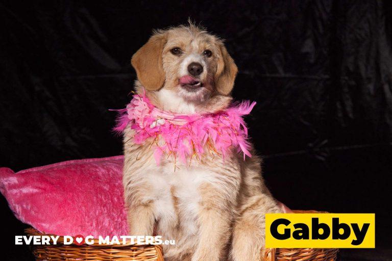 gabby7