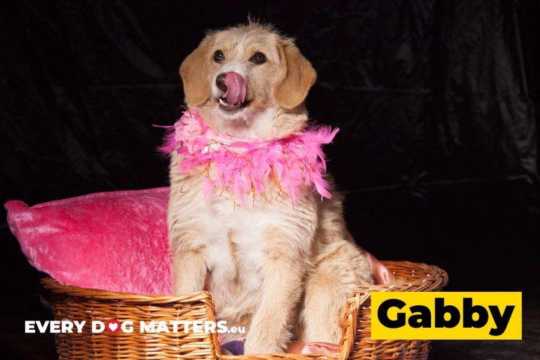gabby8