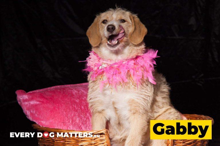 gabby9