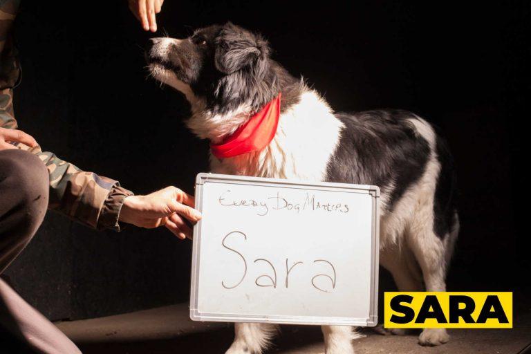 sara007