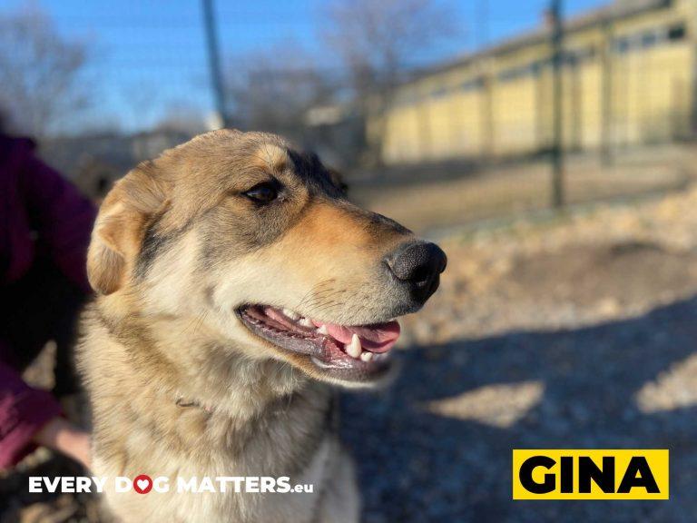 gina4
