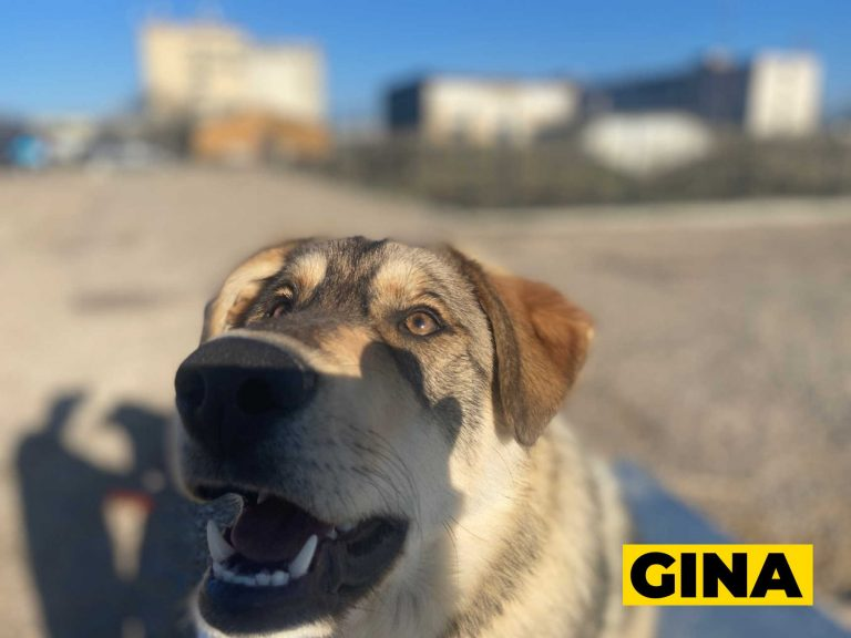 gina5