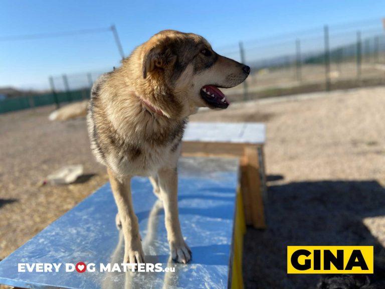 gina6