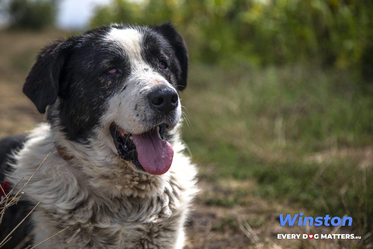 Winston 2
